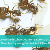 Thumbnail image for 3 Ant & Roach Prevention Tips + Combat Roach & Ant Killing Bait Strips Review