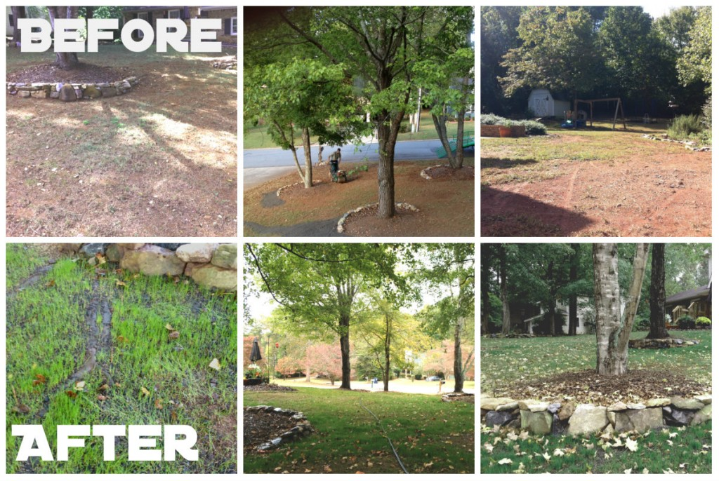 We Have a Green Lawn, Thanks To TruGreen!  Before and After Photographs