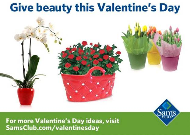 Sam's Club Valentine's Day Flowers