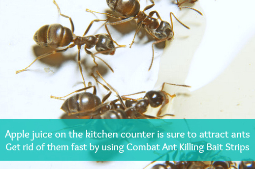 Summer Survival Tip: Survive Bug Season With Combat Ant and Roach Killing Strips